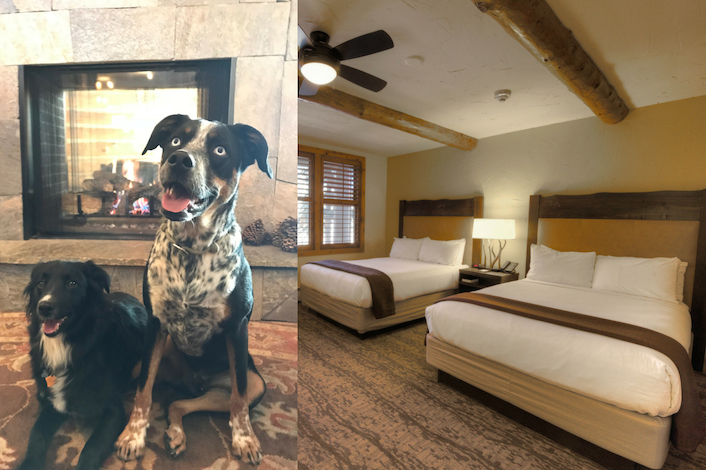 image of a dog and bedroom